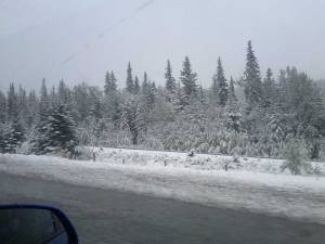 Snow covers the trees at the side of the highway
