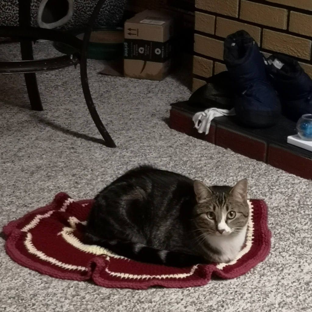 Cat sitting on small blanket on the floor