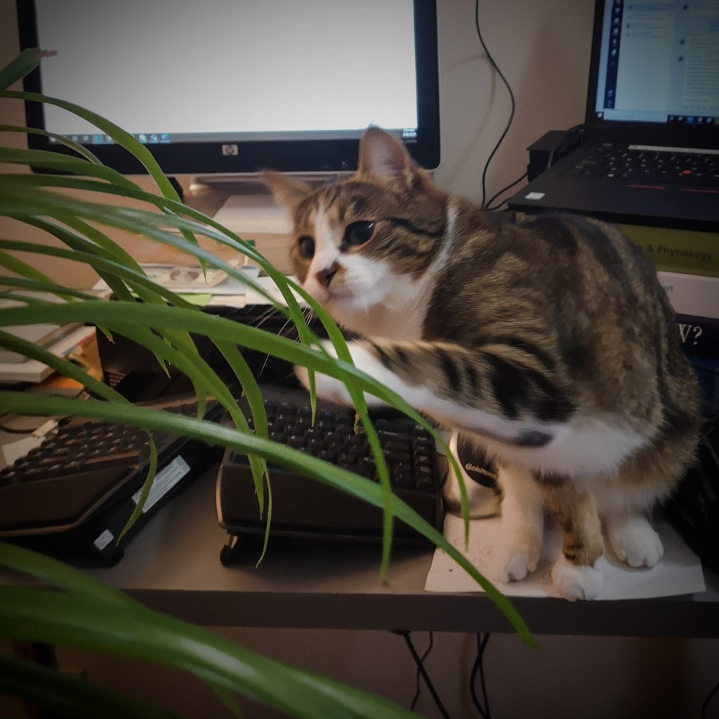 Cat sits on a desk with plant leaves in front. The cat is reaching out to try to catch the plant