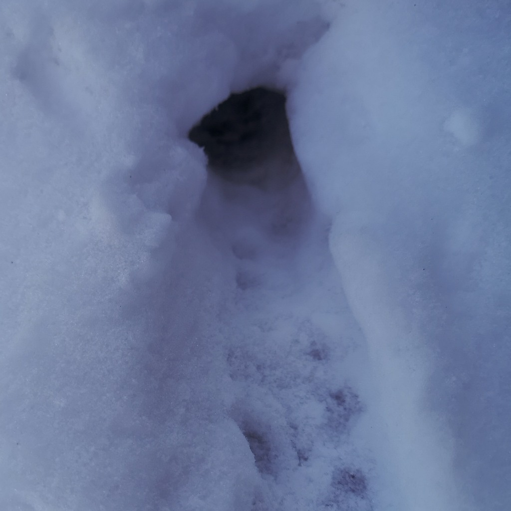 Small hole on the edge of the snow